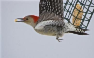 Norma's Birds