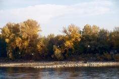 Autumn on the Danube